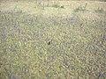 Yukon-Charley Rivers Scenic, 2003 (101b04dd-1042-4db0-a432-bef52053e698).jpg