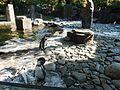 Zoo Praha, tučňák Humboldtův.jpg