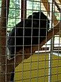 Zoo Tábor-Větrovy, tamarín 01.jpg