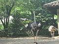 Zoológico de Cali 96.JPG