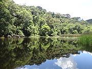 """""""Composição"""" - Lago - Parque Estadual da Cantareira - São Paulo"""