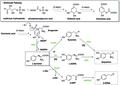 (S)-Higenamine Biosynthesis-1.tif