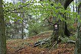 Řevničov, Louštín, památný strom.jpg