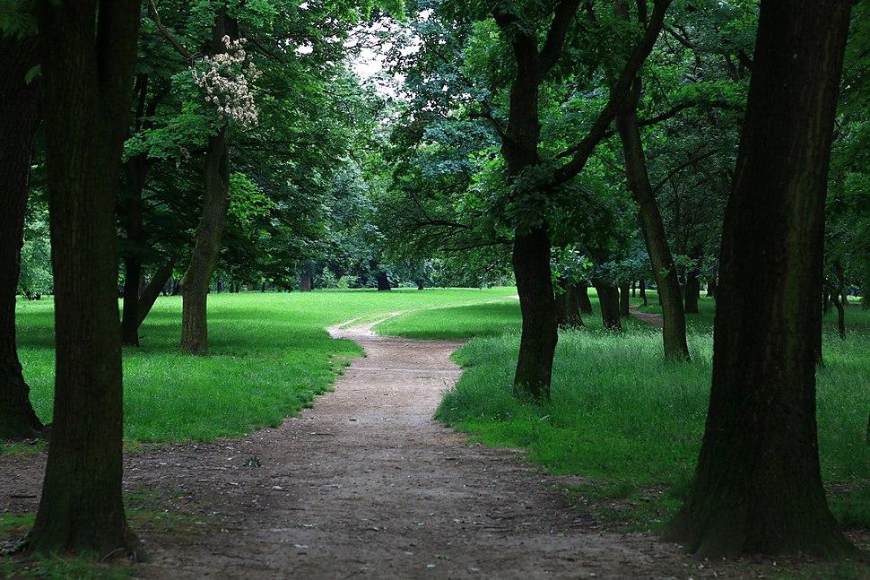 Šuma Košutnjak