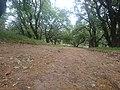 Το δάσος στο χωριό Χαλκιαδές στην περιοχή των Φαρσάλων.JPG