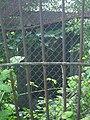 Єврейське кладовище Дрогобич могила у клітці2.jpg
