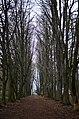 Дендропарк Поділля у Хмельницькому. Фото 1.jpg