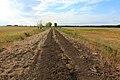 Дорога по дамбе в северо-западном направлении - panoramio.jpg