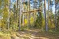 Начало экологической тропы в Медведском бору.jpg