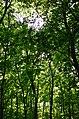 Парк Аскольдова могила у Києві. Фото 11.jpg