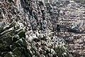 Птичий космос. Птичьи базары на острове Арий Камень.jpg