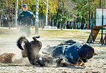 Собаки НГУ 4292 (18734118843).jpg
