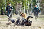 Собаки НГУ 5014 (19328595706).jpg