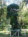 Софора японська в Заліщицькому парку.JPG