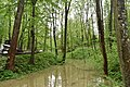 Трускавецький парк 4.jpg