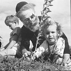 Plantation d'arbres pour Tu BiShvat, 1945. Photographe : Zoltan Kluger
