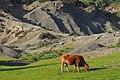 """פרה על רקע מדרון סלעי טוף בשמורת טוף כרם מהר""""ל.jpg"""