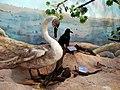 حیوانات تاکسی درمی شده - موزه تاریخ طبیعی شهر قم 09.jpg