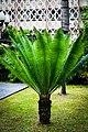 พรรณไม้ในมหาวิทยาลัยเกษตรศาสตร์ KU Thailand Photographed by Trisorn Triboon-75.jpg