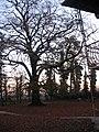 ცაცხვის ხე, დეკემბერი 2010 - panoramio.jpg