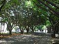 中原大學 風景 - panoramio.jpg