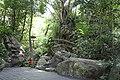 呀诺达热带雨林风光 - panoramio (2).jpg