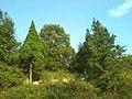 岳四塆后山 - panoramio.jpg