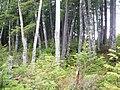 御岳自然休養林胡桃島・県道435号線 - panoramio.jpg