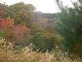 日吉台公園の隣り - panoramio.jpg