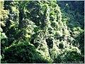 王子山森林公园 - panoramio (5).jpg