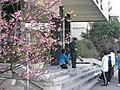 群英樓前的櫻花和教官的身影 - panoramio.jpg