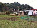 草地を穿り返す猪 2009-12-13 - panoramio.jpg