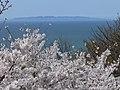 諸上寺公園から粟島 - panoramio.jpg