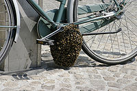 200px--_Bee_swarm_on_a_bicycle_%281-5%29_-