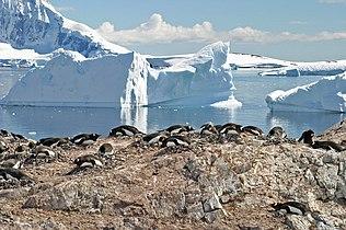 00 2118 Antarctica - Cuverville Island.jpg