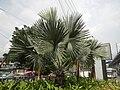 02354jfBalintawak Interchange Caloocan Quezon City FootbrindgeEDSA Roadfvf 02.jpg