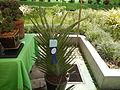 05629jfMidyear Orchid Cactus Exhibits Quezon Cityfvf 24.JPG