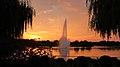 190909 153 Chicago Botanic Gdn - Crescent Gdn, North Lake, Salix alba 'Vitellina-Tristis' Golden Weeping Willow (48861629162).jpg