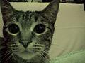 20010426 Cat 01 (8652473761).jpg