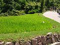 2008 07 Botanical Garden Meran 71000R0279.jpg
