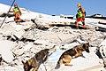 2010년 중앙119구조단 아이티 지진 국제출동100118 세인트제라드 지역 수색활동 (13).jpg