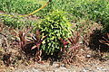 2010 07 12180 5314 Chenggong Township.JPG