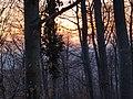 2011-03-24-184658 49,393083, 8,697968.JPG - panoramio.jpg