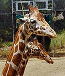 2012-06-09 Oakland Zoo 048 (7439947746).jpg