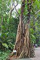 2016 Singapur, Ogrody botaniczne (243).jpg