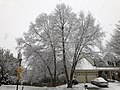 2021-02-07 08 14 24 River Birches coated in snow during winter along Cobra Drive in the Chantilly Highlands section of Oak Hill, Fairfax County, Virginia.jpg