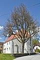 2 Sommerlinden bei der Pfarrkirche von Buchbach 2014-04 NÖ-Naturdenkmal WT-043.jpg