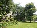 71Mehan Garden Ermita Manila Universidad de Manila 19.jpg