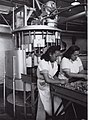 A5314 Canning Department, Trimming Tongues, Westfield Freezing Works.jpg