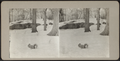 A Squirrel in Central Park snow, from Robert N. Dennis collection of stereoscopic views.png